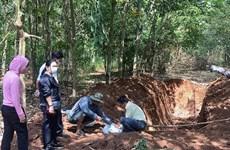 Vụ chôn lợn chết trong lô cao su: Không phát hiện virus gây bệnh