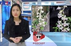 [Audio] Lan đột biến... 'có biến': Nghi vấn chủ vườn ôm tiền bỏ trốn