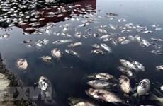 Cá chết bốc mùi hôi thối tại hồ Công viên Trung tâm thành phố Vinh