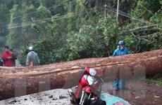 Lâm Đồng: Lốc xoáy quật đổ cây rừng, đè trúng hai phụ nữ