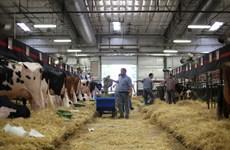 Mỹ đệ đơn khiếu nại Canada liên quan đến hạn ngạch bơ sữa