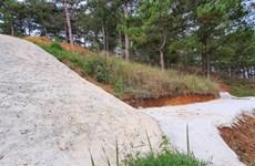 Điều tra vụ đổ bêtông làm đường trái phép trong rừng thông ở Đà Lạt