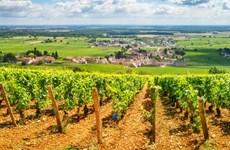 Đại dịch COVID-19 khiến người Pháp 'di cư ngược' về vùng nông thôn