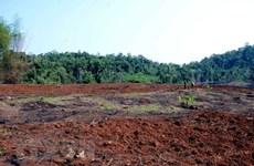 Lâm Đồng: Thu hồi hơn 190ha đất và rừng mà Công ty Trung Nguyên thuê