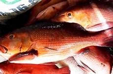 Cảnh báo nguy cơ ngộ độc khi ăn một số loại sinh vật biển