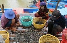 Cà Mau giữ ổn định diện tích 280.000ha nuôi tôm, nâng cao chất lượng