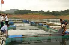 Yên Bái: Phát triển nghề nuôi cá đặc sản trên hồ Thác Bà