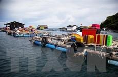 Kiên Giang: Phát triển nghề nuôi cá lồng bè ở xã đảo Thổ Châu