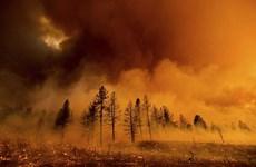Mỹ: Cháy rừng tiếp tục lan rộng tại California, thiêu rụi gần 340km2
