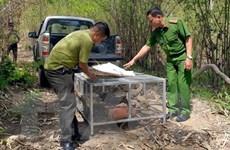 Phạt nặng 2 trường hợp mua bán lâm sản và nuôi nhốt động vật trái phép