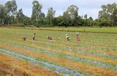 Dịch COVID-19: Kiên Giang mở rộng vùng xanh an toàn sản xuất