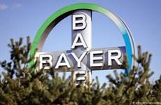 Tập đoàn dược phẩm và hóa chất Bayer lỗ nặng trong quý 2