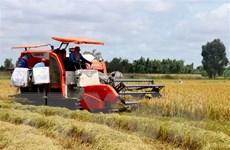 Làm sao để đường đi của lúa gạo ở ĐBSCL bớt 'nhọc nhằn'?