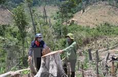 Đắk Lắk: 'Nóng' tình trạng phá rừng giáp ranh tại Ea Kar và Krông Bông