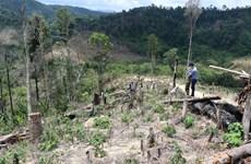 Đắk Lắk: Nhức nhối tình trạng phá rừng ở 'cổng trời Ea Rớt'