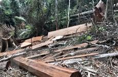 Đắk Lắk: Điều tra vụ phá rừng quy mô lớn tại huyện M'Đrắk