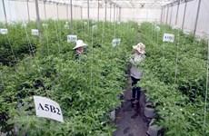 Giải ngân vốn đầu tư công ngành nông nghiệp đạt trên 50%