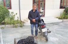 Điện Biên: Bắt đối tượng mua bán, vận chuyển gấu hoang dã