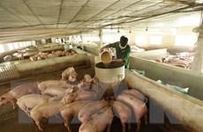 Doanh nghiệp chăn nuôi đón đầu cơ hội nhờ áp dụng mô hình 3F