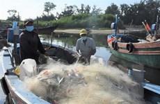 Bà Rịa-Vũng Tàu: Tàu đánh bắt hải sản ở 'vùng xanh' được ra khơi