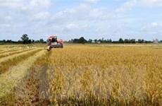 Ngành lúa gạo chưa gỡ được 'nút thắt tín dụng' như kỳ vọng