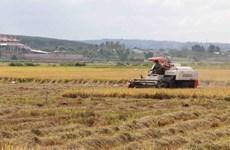 Hải Dương: Tai nạn trên cánh đồng làm hai người thiệt mạng