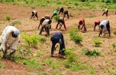 LHQ cảnh báo nguy cơ khủng hoảng lương thực ở miền Đông Niger