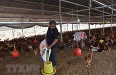 Thức ăn chăn nuôi: Còn ăn đong, lệ thuộc nhập khẩu giá còn cao