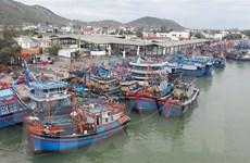 Áp thấp gây mưa dông mạnh, các địa phương kêu gọi tàu thuyền vào bờ