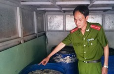 Hà Nội: Bắt quả tang 2 đối tượng chở 250kg nội tạng bốc mùi