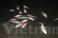 Thông tin tiếp theo về diễn biến vụ cá chết ở hồ Linh Đàm