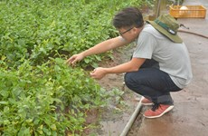 Nhóm du học sinh đánh liều với giấc mơ trồng rau sạch