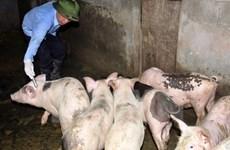 Cấm sử dụng kháng sinh trong chăn nuôi và thủy sản từ năm 2020