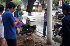 Hà Nội: Triệt phá ổ nhóm chuyên cưa trộm sưa để bán trục lợi