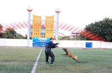 Để chó thả rông cắn chết người, chủ nuôi có thể bị phạt 5 năm tù
