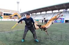 Điểm lại những vụ chó bỗng dưng 'nổi điên', tấn công con người