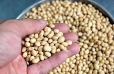 Công dụng của hạt đậu tương và đậu nành đối với sức khỏe
