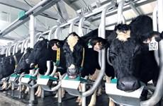 Vinamilk giới thiệu sữa tươi A2 đầu tiên tại Việt Nam