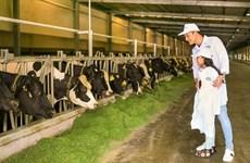 Nghìn cô bò hạnh phúc hôm nay, triệu ly sữa tươi ngon ngày mai