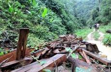 Lào Cai thu 300m3 gỗ và đánh sập nhiều lò đào vàng