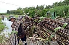 Tây Ninh: Mía cháy hàng loạt gây hại gần 10 tỷ đồng