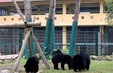 Tổ chức chiến dịch tuyên truyền pháp luật bảo vệ loài gấu