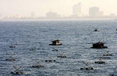 Phát triển bền vững nghề nuôi tôm tại duyên hải Miền Trung