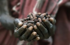 Thị trường cacao thế giới đối mặt khủng hoảng nguồn cung