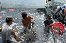 Tổ chức lại sản xuất thủy sản để nâng giá trị, phát triển bền vững