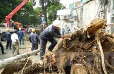TP. HCM: Đề xuất lập quỹ hỗ trợ sự cố do cây xanh gây ra