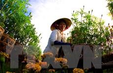 Đồng Tháp hợp tác với Hà Lan về nông nghiệp công nghệ cao