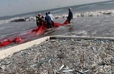 Ngư dân Mỹ vứt bỏ lượng cá ăn được trị giá 1 tỷ USD mỗi năm