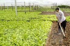 ĐBSCL chuyển đổi đất lúa kém hiệu quả sang cây trồng lợi nhuận
