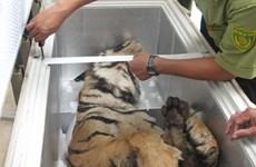 Bảo tồn loài hổ ở Việt Nam theo hướng bền vững và lâu dài
